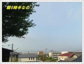 IMGP0746_20130712234002.jpg