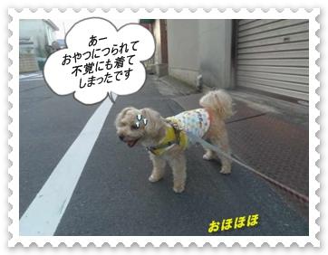 IMGP1011_20130719005326.jpg