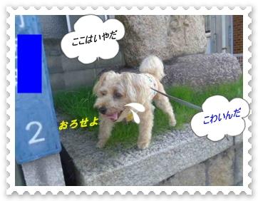IMGP1071_20130720235238.jpg