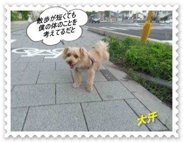 IMGP1678_2013080223451432b.jpg