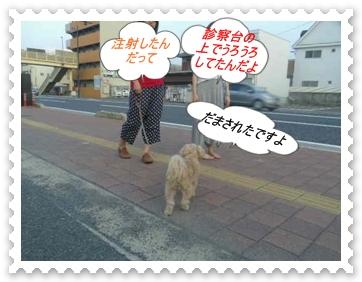 IMGP1741.jpg