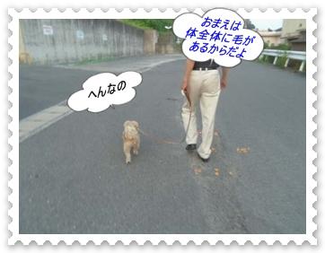 IMGP2235_201308180126252fd.jpg