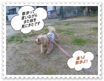 IMGP6079.jpg