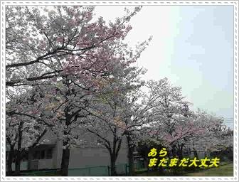IMGP6304_20130404232538.jpg