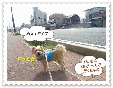 IMGP6328_20130404234342.jpg