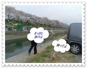 IMGP6407_20130406002213.jpg