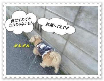 IMGP6498_20130409001636.jpg