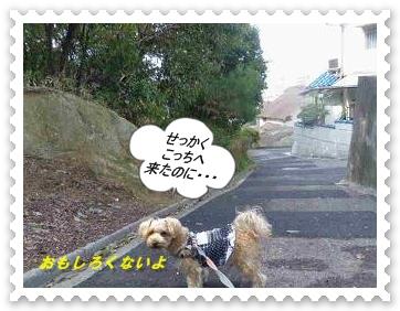 IMGP6527_20130409002717.jpg