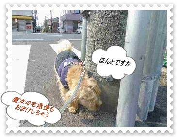 IMGP6639_20130412003610.jpg