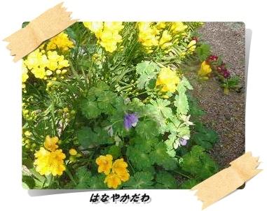 IMGP6920.jpg