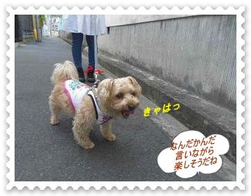IMGP6963.jpg