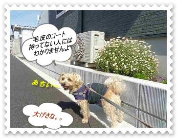 IMGP7802_20130509231349.jpg