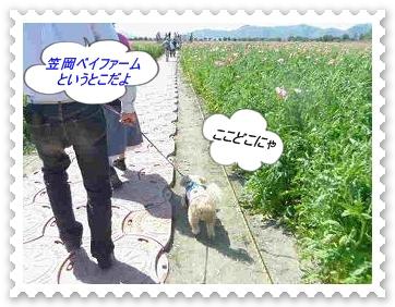 IMGP7948.jpg