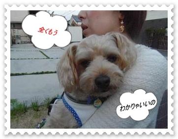 IMGP8038_20130514003243.jpg