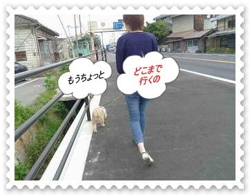 IMGP8166.jpg