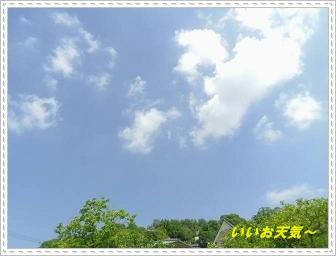 IMGP8227_20130519002508.jpg