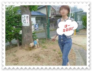 IMGP8258_20130520010131.jpg
