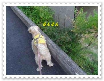 IMGP8315_20130521001613.jpg