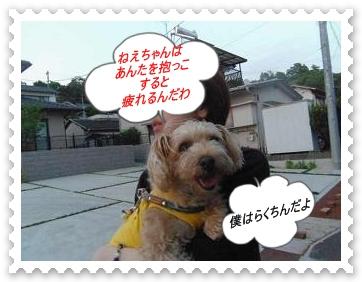 IMGP8324_20130521002002.jpg