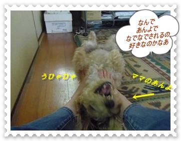 IMGP8443_20130524014758.jpg