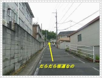 IMGP8932_20130603011212.jpg