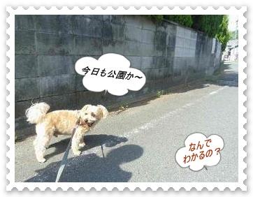IMGP9017.jpg