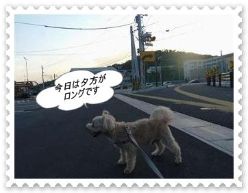 IMGP9041.jpg