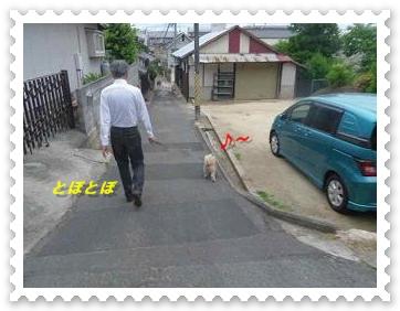 IMGP9324_20130610013534.jpg