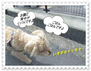 IMGP9388.jpg