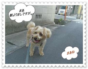 IMGP9506.jpg