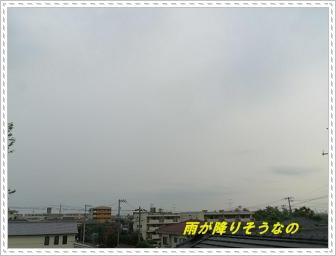 IMGP9706_20130619001312.jpg