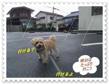 IMGP9805_20130622012251.jpg