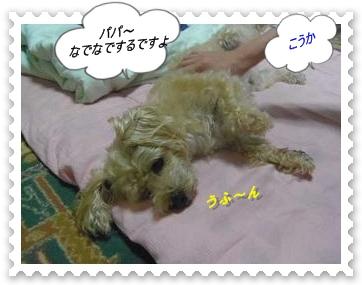 IMGP9885_20130624020429.jpg