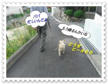 IMGP9973_20130625013003.jpg