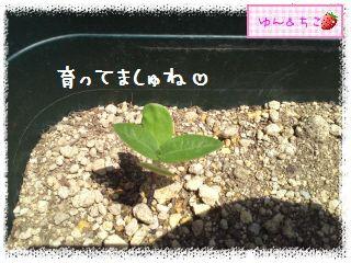 プランターガーデニング日記★3★-3