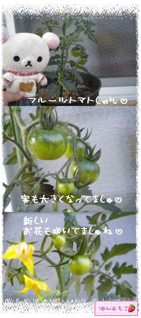 トマト観察日記★9★わき芽ぞくぞく~-2