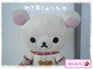 トマト観察日記★12★わき芽しゃん植え替え②-1