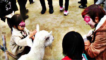 2013.3京都動物園①