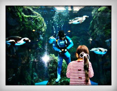 2013.4京都水族館