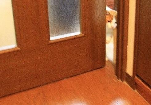 ブログNo.38(お出迎え猫)2