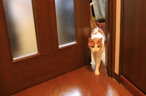 ブログNo.38(お出迎え猫)3