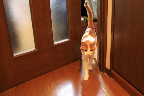 ブログNo.38(お出迎え猫)4