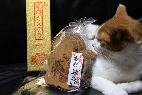 ブログNo.38(お出迎え猫)8
