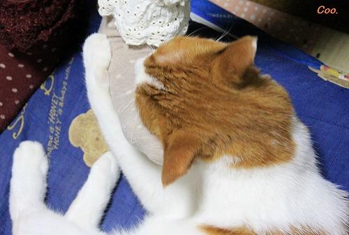 ブログNo.51(長座布団に燃える猫)1