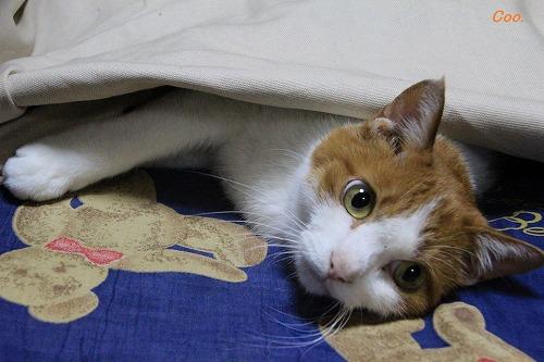 ブログNo.51(長座布団に燃える猫)2