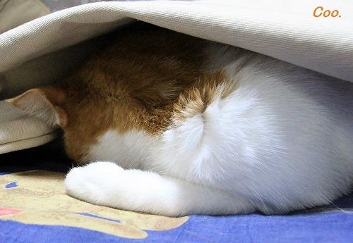 ブログNo.51(長座布団に燃える猫)3