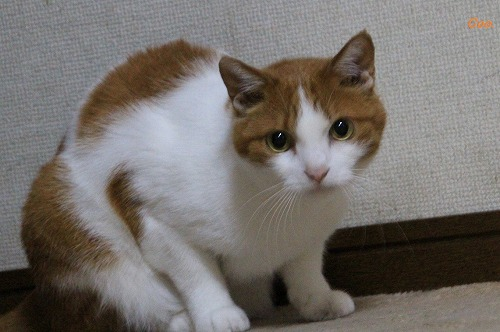 ブログNo.51(長座布団に燃える猫)6