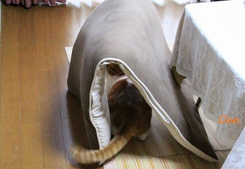 ブログNo.51(長座布団に燃える猫)9