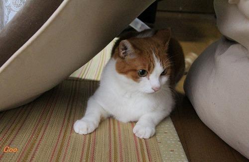 ブログNo.51(長座布団に燃える猫)10