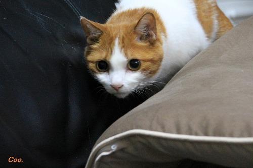 ブログNo.51(長座布団に燃える猫)11